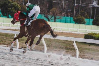 Kolkata Race Odds, Day 2: November 12, 2020 Preview